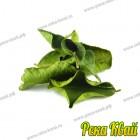 Листья кафрского лайма