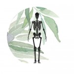 Кости, мышцы, суставы